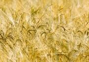 Landboforening: Nye pesticider medfører mindre miljøbelastning