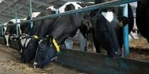 Mælkeproducenter i fremgang