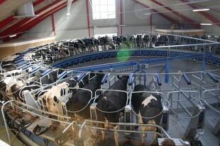 Mælkeproducenter får mulighed for rentefri afdrag