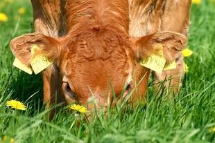 Ny jordfordeling en fordel for landmænd og natur