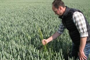 Til kamp mod italiensk rajgræs på Djursland