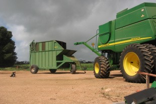 Ukrudtsresistens en trussel mod dyrkningssystemet