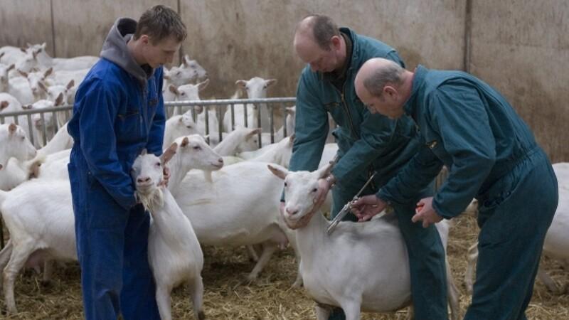 Landbrug kan fortsætte med udenlandske fodermestre