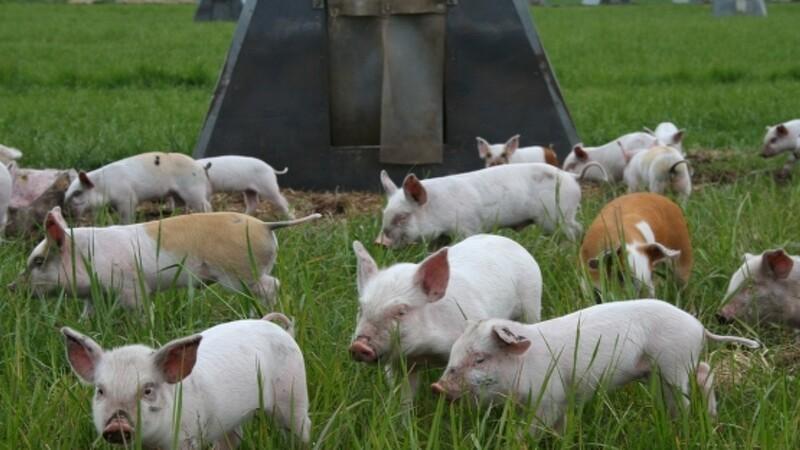 Danmark sætter dyrevelfærd på dagsordenen