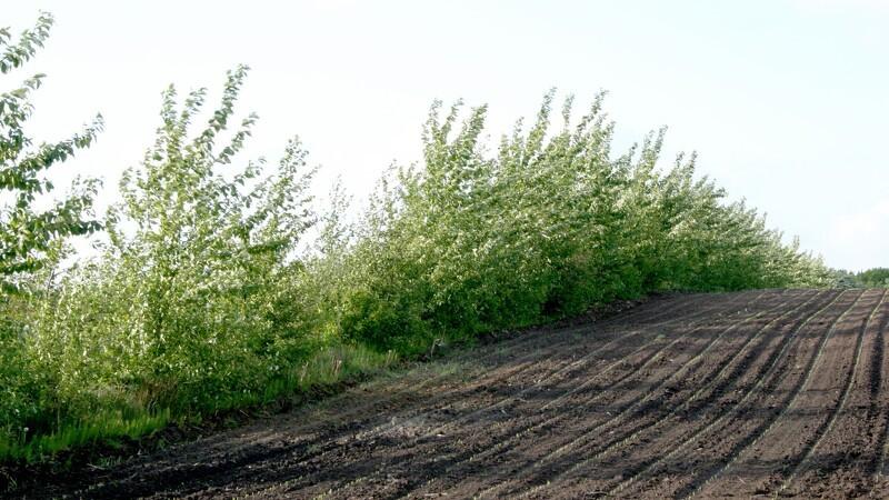 Plantningslaug frygter lukning