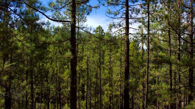 Skovbruget til kamp for biomasse