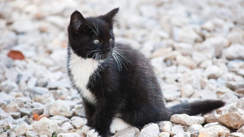DF kræver registrering af katte