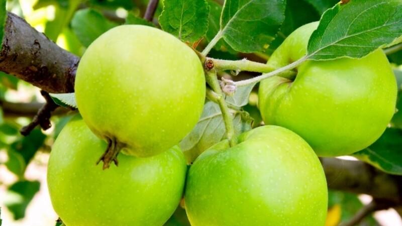 ØL: God håndsrækning til fødevarevirksomheder