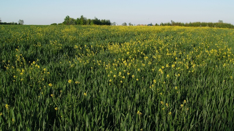 NaturErhvervstyrelsen strammer kontrolprocedurer for økologer