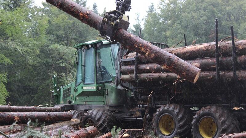 I skoven er et godt øjemål afgørende