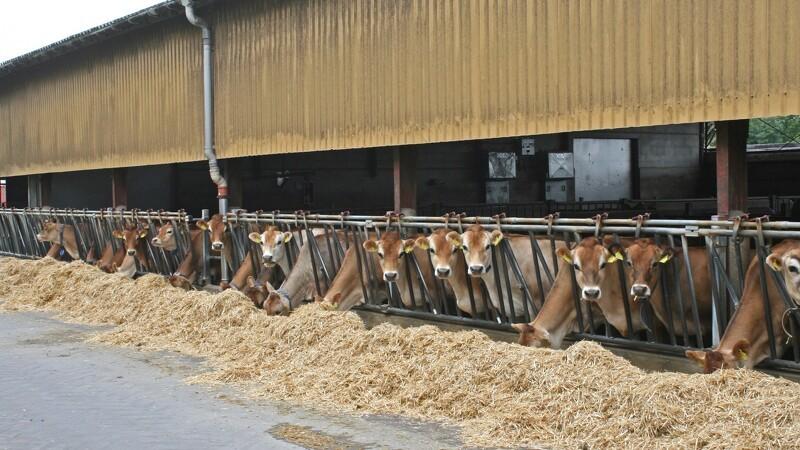 Kvægbrugere bruger mindre medicin