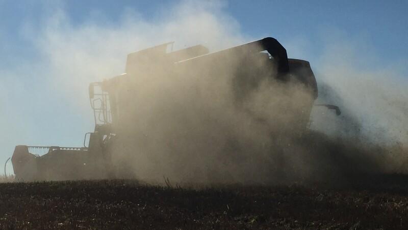 BMG oplever et bedre høstudbytte