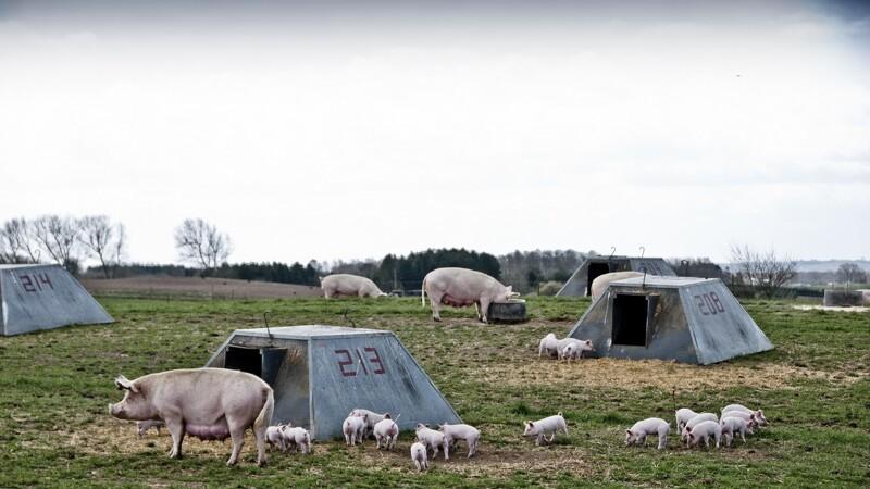 ØL: Regeringen baner vej for mere økologi i Danmark