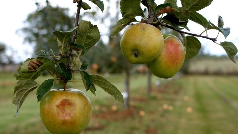 Dansk frugt og grønt får ros trods fund af prosulfocarb