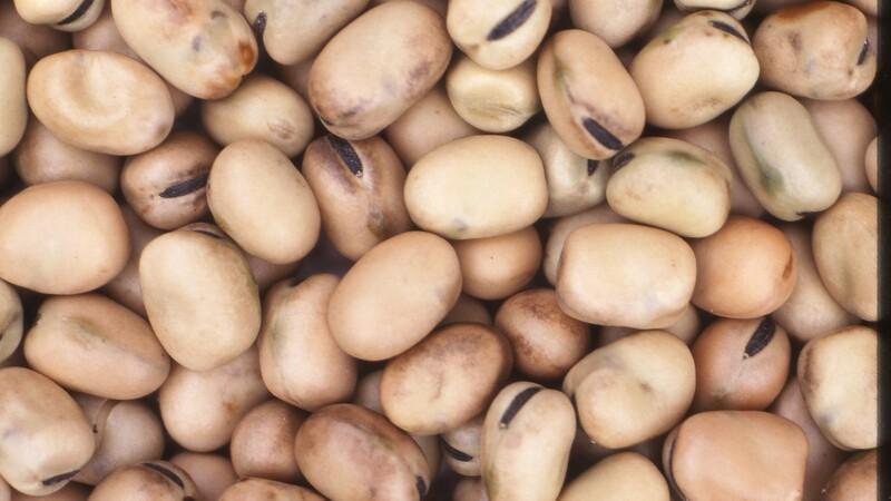 Vårafgrøderne kræver alternativ tankegang