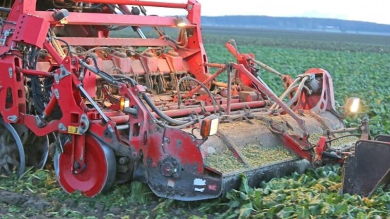 Manuel lugning er vejen frem i økologiske roer