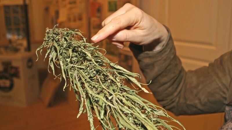 Folketinget vedtager forsøg med medicinsk cannabis