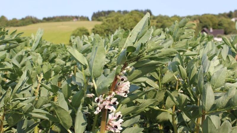 Lav kornpris øger behovet for specialafgrøder