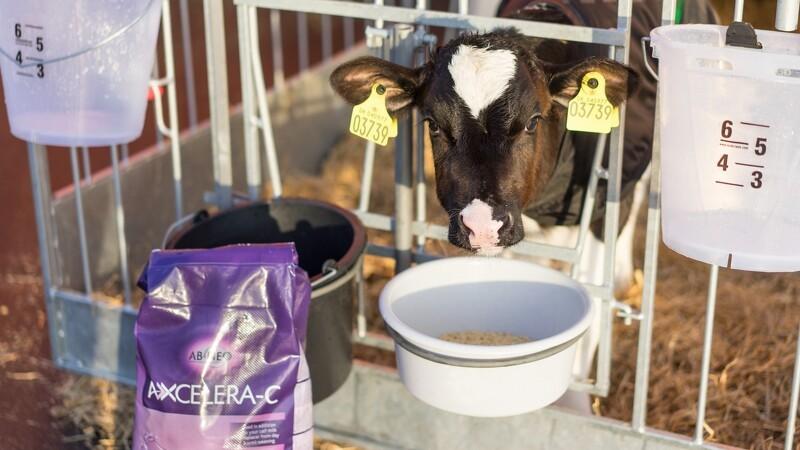 Calvex lancerer kalvefoder og MælkeTaxa til grise
