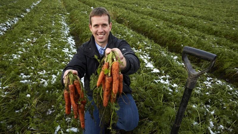 Dansker producerer 1,3 milliarder gulerødder om året