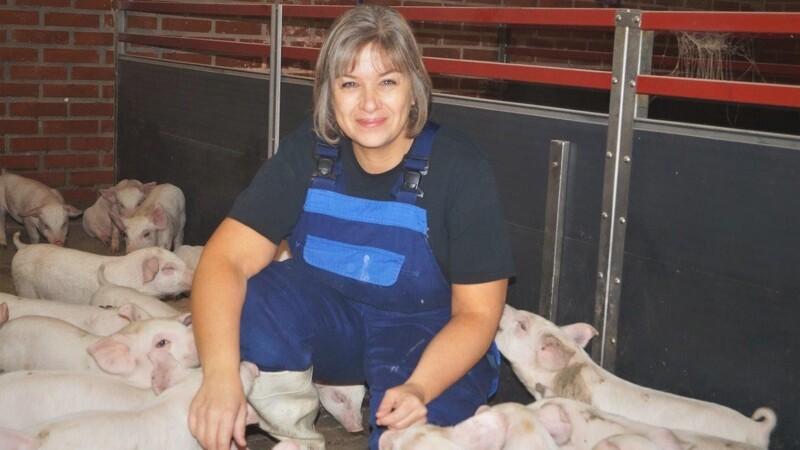 Styrkelse af grisens immunforsvar kan være fremtidens sygdomsbekæmpelse