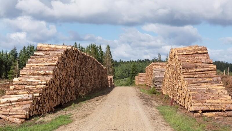 Rekordlavt tyveri af træ
