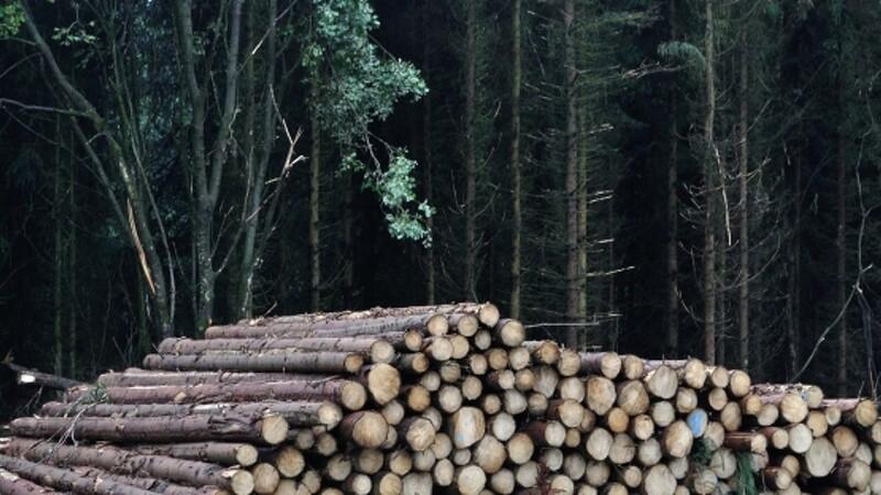 Verdens skove: At fælde flere træer løser ikke klimakrisen
