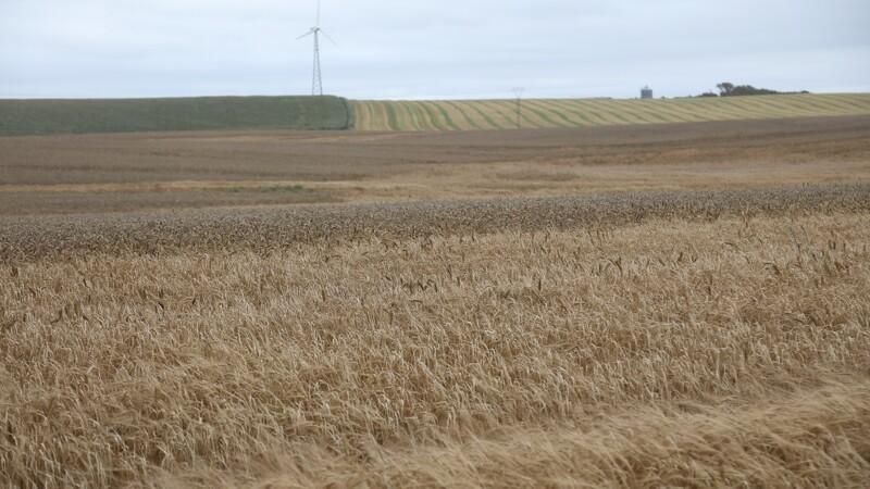 Hveden i USA styrtdykker og rublen truer dansk eksport