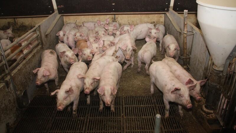 L&F: Antibiotika-forbrug tæt på mål
