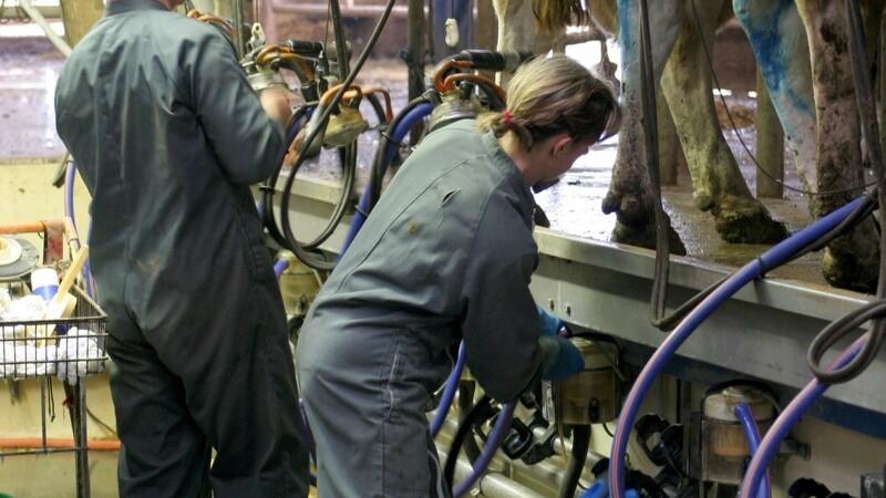 Rekordmange sydeuropæere i landbruget