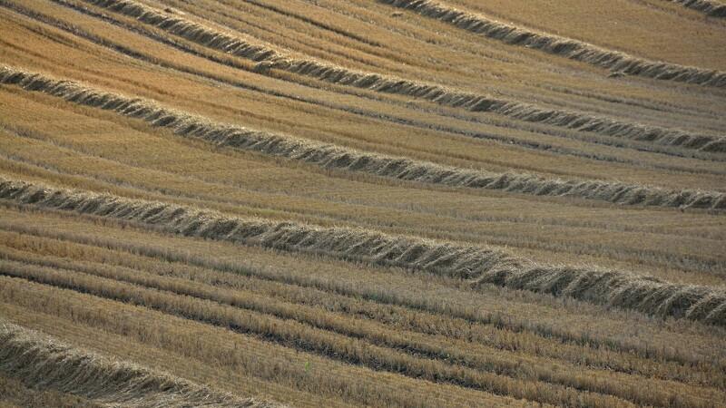EU-udspil:Dansk landbrugsstøtte skæres med 250 mio.