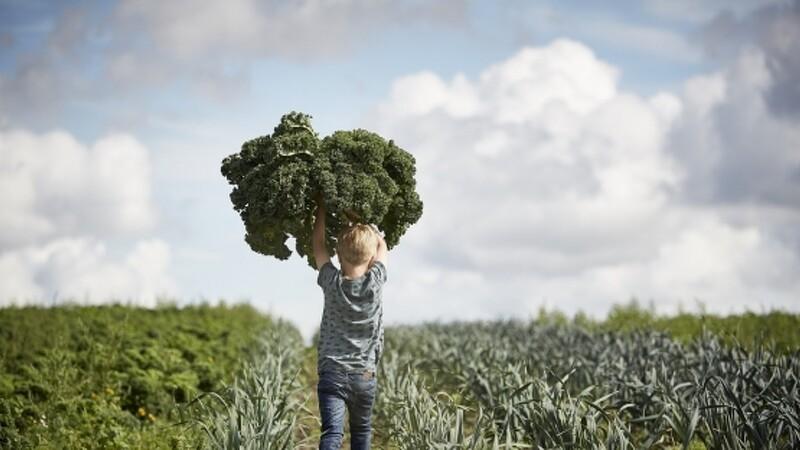 Økologisk Landsforening henter millioner