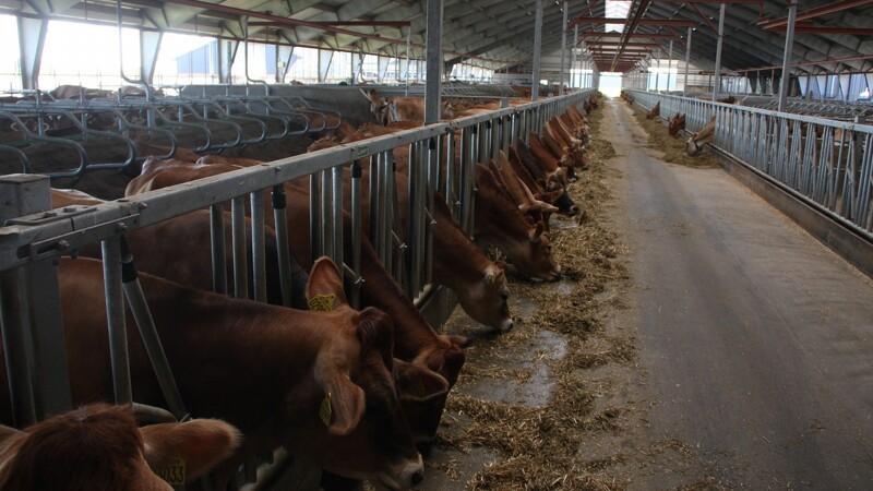 Flere skal i job i landbruget