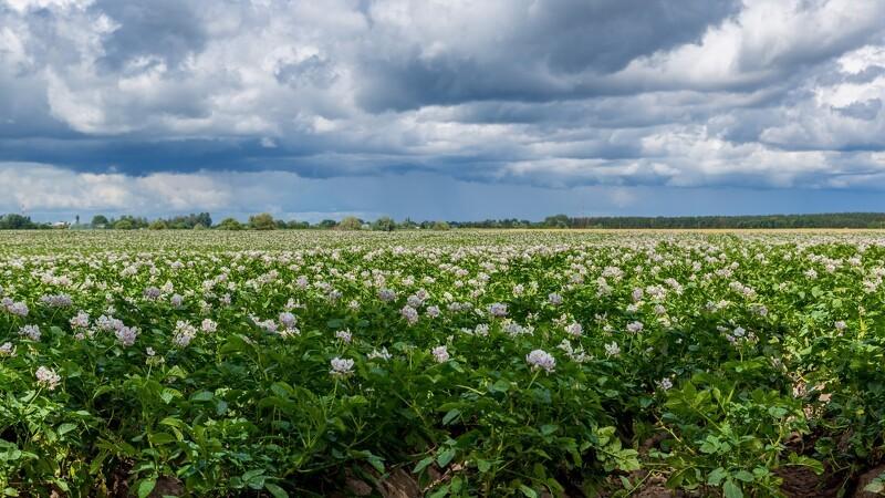 AKM udvider inden kartoffelhøsten