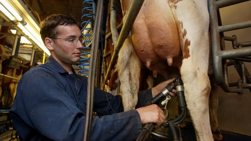 Ændrede regler for kvægstaldsordningen