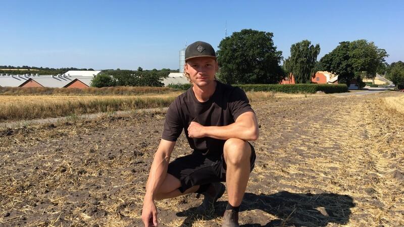 Landboforening: Det er krudt, vi høster lige nu