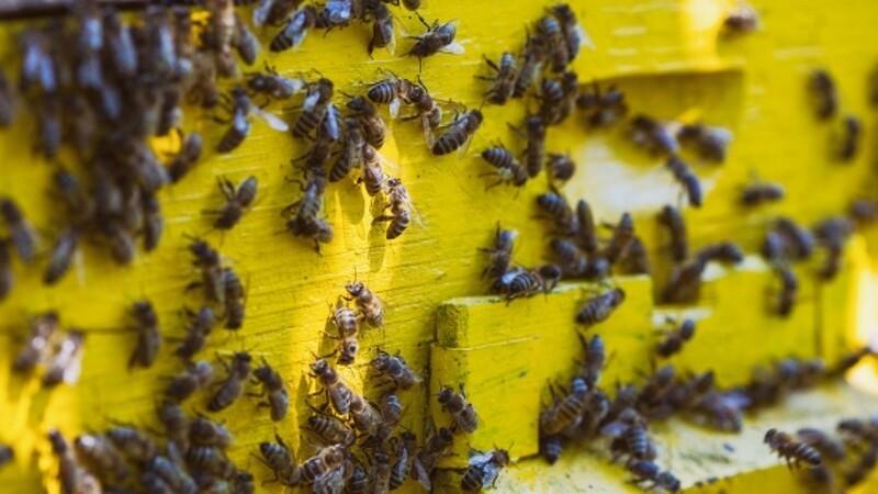 Bi- og frugtavlere rammes hårdt i tørken