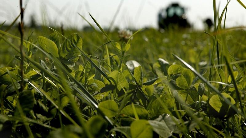 Ny frist for såning af efterafgrøder