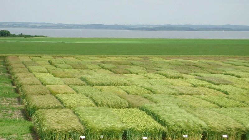 30 millioner til fremtidens afgrøder