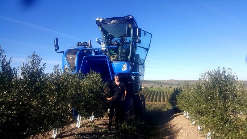 Esben er olivenhøster i Portugals varme