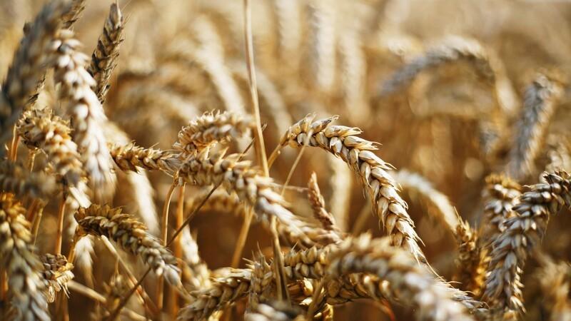 Kjærgård Landbrugsskole presses på økonomi