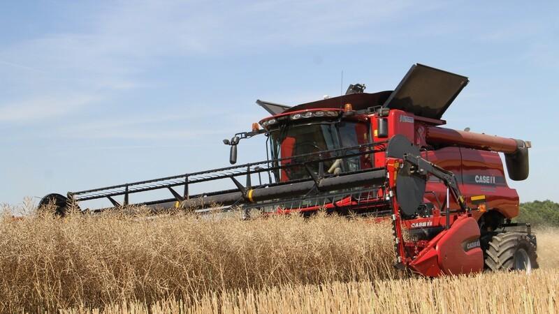 Sortehavshvede taber i konkurrence med EU-hvede