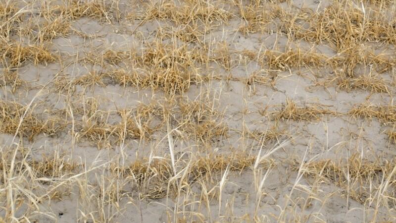 Status efter tørke: Tab på 4 mia. kr.