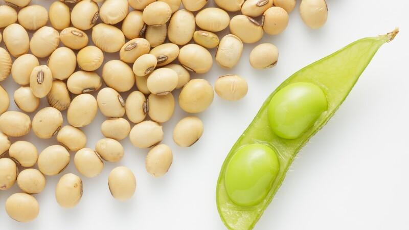 Brasilien med rekord i eksport af sojabønner