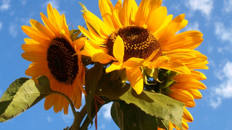 Så blomster ved dit landbrug