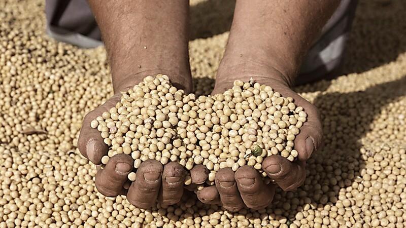 Festfyrværkeri i afgrødemarkedet
