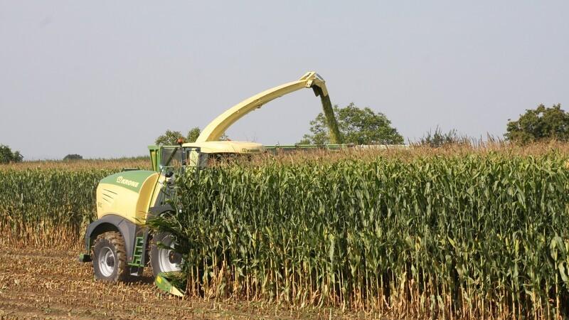 Kornafgrøderne i Chicago øger risikopræmierne