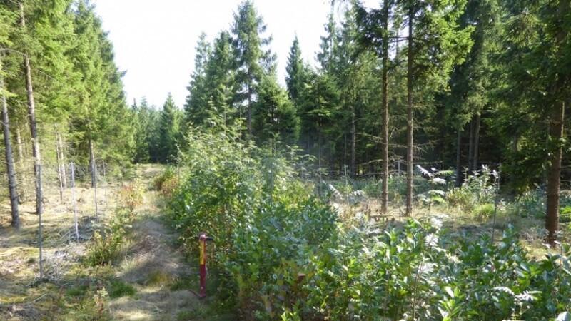 Planter kan på sigt erstatte vildthegn