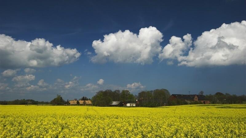 Ny teknologi kan halvere landbrugets klimaaftryk