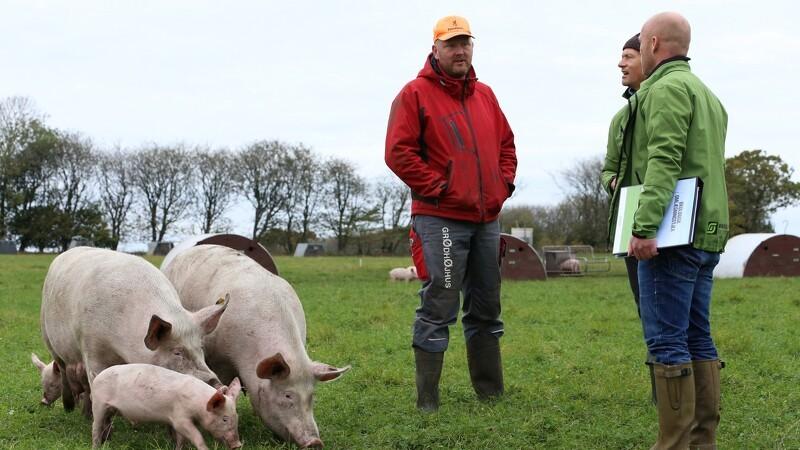 Viborg Kommune tilbyder landmænd øko-omlægningstjek